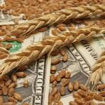Обзор зернового рынка от 14 октября 2019 г.