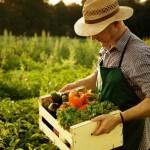Субсидии – обученным фермерам