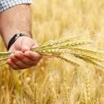 Около 500 фермеров Жетысу повысили уровень профессиональных знаний