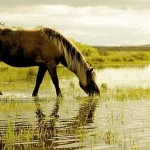 В Жамбылской области погибли лошади, пившие воду возле сброса канализации