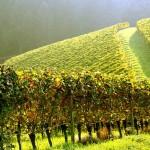 В Молдове изобрели нанопорошок для восстановления почвы