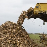 Жамбыл облысында қант зауыты фермерлердің адал ақысын бермей отыр