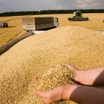 МСХ РК объявило закупочные цены на зерно