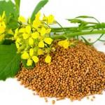 Аграрии Костанайской области экспортируют органическую продукцию на рынки Европы
