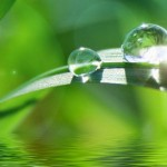 В Экологическом кодексе учтут предложение Палаты Предпринимателей