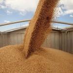 Продавать зерно на основе технологии блокчейн казахстанские фермеры, возможно, начнут в мае