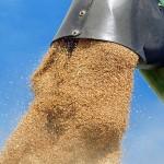 Бумажные зерновые расписки хотят «сжечь» досрочно