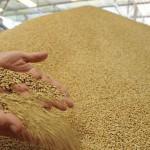 Принципы выбора ПО для управления сельхозпредприятием