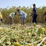 Индекс ФАО по ценам на продовольствие растет под давлением роста цен на растительные масла