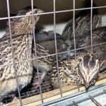 Казахстан: Птицы приносят здоровье и доход