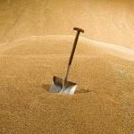 Казахстан не рассматривает возможность дополнительной поддержки экспортёров зерна