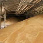 Качество зерна-2017 (для анализа)
