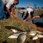 Знания – новая парадигма для будущего продовольствия и сельского хозяйства