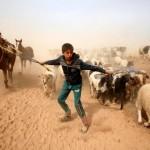 Всё больше стран предпринимают усилия по борьбе с устойчивостью к противомикробным препаратам в пищевой промышленности и в сельском хозяйстве
