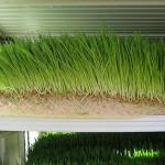 Есть ли дотации фермерам при покупке оборудования для производства зелёного корма методом гидропоники?