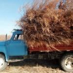В Кызылординской области задержаны нарушители, занимавшиеся незаконной вырубкой саксаула