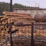 Незаконная вырубка леса обнаружена в Акмолинской области