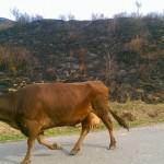 «Мы все испугались»: Фермеры заявили об экологической катастрофе в предгорьях Алатау
