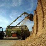 Мировое производство и уровень запасов зерновых достигнут рекордно высокой отметки в 2018 году
