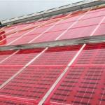 Солнечные панели на крышах теплиц повышают урожайность