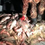 В Атырау у браконьеров изъяли более 600 кг рыбы