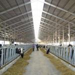 Казахстанско-Венгерский фонд инвестирует  в очередной проект в АПК Казахстана