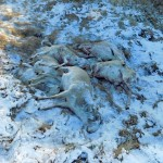 Группой «Сапсан» задержаны инспекторы по факту браконьерства