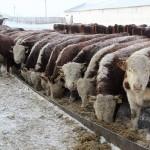 База данных ДНК пород крупного рогатого скота Казахстана