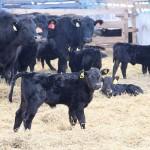 База данных генотипированных образцов ДНК мясных и молочных пород Казахстана