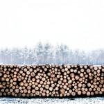 В ВКО надзорные органы против отмены долгосрочной аренды на лесопользование
