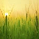 Добровольное страхование в растениеводстве предлагает применять «Атамекен»