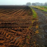 Иностранцам хотят запретить арендовать землю в Казахстане