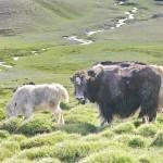 Запущен новый онлайн-инструмент, который поможет сохранить генетические ресурсы животных