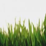 Молдавские учёные научились превращать пестициды в удобрения