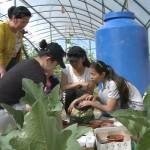 В каждой школе Мангистауской области построят теплицы