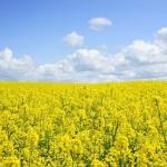 Совершенствование обязательного страхования в растениеводстве