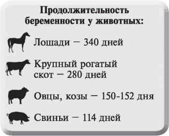 Продолжительность беременности у животных