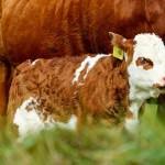 Весенняя шпаргалка для начинающего животновода