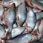 Атырауские рыбаки восстанавливают утерянные в девяностые годы рынки сбыта