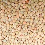 Казахстан динамично наращивает производство и экспорт бобовых культур
