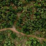 Устойчивое управление лесами – в центре внимания регионального совещания в Тбилиси