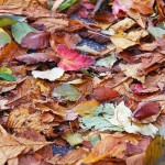 Брикеты из опавшей листвы как альтернатива углю