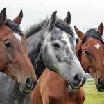 Костанайским лошадям вошьют GPS-маячки для ветеринарной слежки