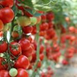 Бизнесмены ОАЭ готовы инвестировать в органическое производство Казахстана