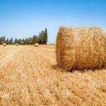 Аграрии могут оказаться в долгах уже осенью