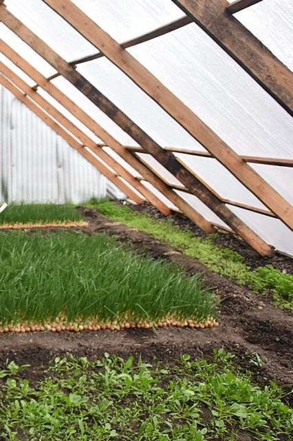 На 120-ти квадратах зимой Булегеновы выращивают зелень, весной  – рассаду овощей и цветов. Фото: kstnews.kz