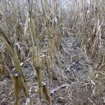 Опыт: 13 ошибок фермера при обработке почвы