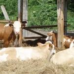 Актюбинская область: Почему фермерам отказывают в субсидии?
