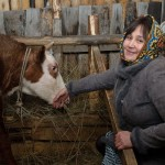 20 коров для бизнес-леди