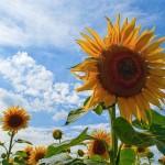 Даниал Ахметов: «Сельскохозяйственникам ВКО необходимо менять агрокультуру»